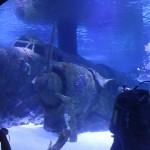 Een duiker in het aquarium van Antalya